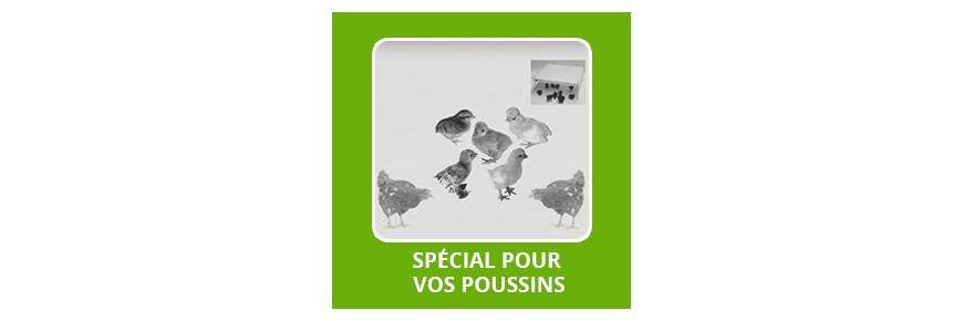 Eleveuse Electrique Poussin | Special Pour Vos Poussins