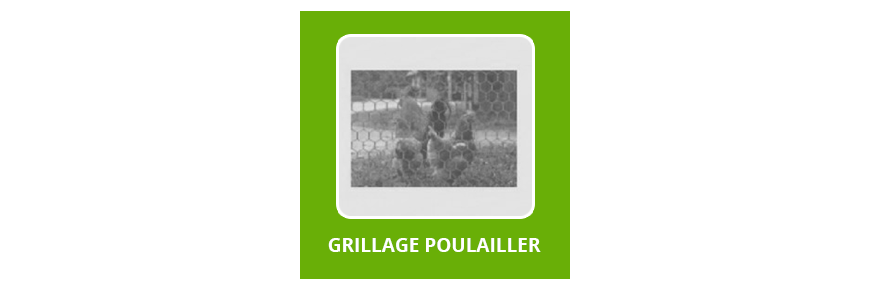 Grillage poulailler
