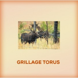 Grillage Torus