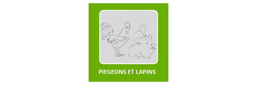 Pigeons & Lapins